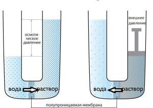 осмос