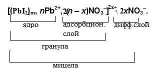 строение мицелы