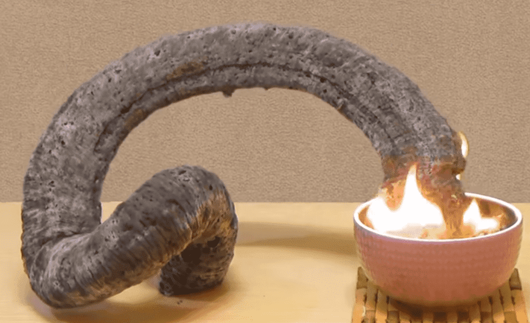 фараоновые змеи